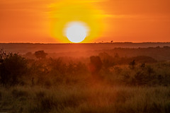 Sunrise on the Maasai Mara (Jill Clardy) Tags: africa kenya safari vantagetravel park orange sunrise dawn day break reserve national mara maasai 201902269l8a1995