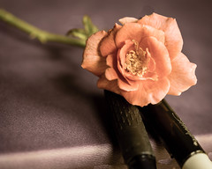 Reflection (still life) (risaclics) Tags: petals pink rose roses stilllife 60mmmacro august2019 nikond610d journal pens