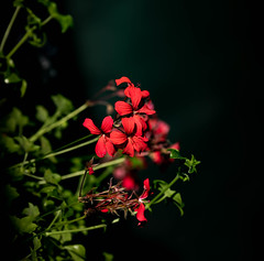 Into the light (SusieMSB7) Tags: outdoors light nature garden flower