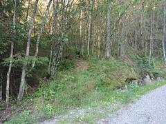 Piggtrådgjerde sti på Kykkelsrud (mtbboy1993) Tags: norway forest norge barbwire singletrack piggtrådgjerde askim indreøstfold kykkelsrud kykkelsrudveien trail skog sti østfold indreسtfold سtfold
