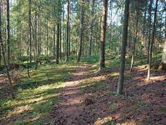 DSC_1067edit (mtbboy1993) Tags: singletrack sti trail forest skog askim indreøstfold østfold kykkelsrud kykkelsrudveien norge norway sonycameraapp rawtherapee