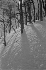 27 (mati.a) Tags: trees arboles bosque forest nieve snow chile 35mm film luz light analog nikon fm2 ilford nikonfm2 hp5 ilfordhp5plus bw