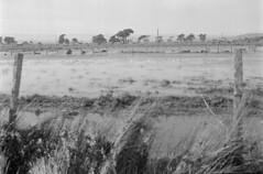 16 (mati.a) Tags: paisaje landscape humedal wetland chile 35mm film analog nikon fm2 nikonfm2 ilford hp5 ilfordhp5plus bw