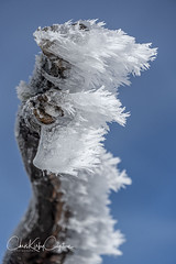 A dead branch of a Snow Gum is covered with ice after a particulary cold morning (-6oC) at Mount Hotham, Victorian Alps, Australia (ChrisKirbyCapturePhotography) Tags: ice iced winter snow mthotham deadbranch snowgum