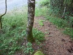 Piggtrådgjerde sti på Kykkelsrud (mtbboy1993) Tags: norway forest norge trail skog sti barbwire østfold singletrack piggtrådgjerde askim indreøstfold kykkelsrud kykkelsrudveien indreسtfold سtfold