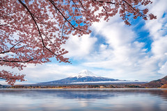 Fuji mountain with cheery blossom full blooming at lake Kawaguchiko (anekphoto) Tags: fujinomiya nature park outdoor oriental reflection landscape fujiyoshida cherryblossom pink tourism blossom japanese season landmark sky morning fujiyama volcano asia shizuoka fuji kawaguchiko lake snow water mount sakura mountain spring kawaguchi japan yamanashi tokyo flower tree mt festival tourist sunset twilight skyline sightseeing snowcapped cherry lanscape panorama boat blosson travel