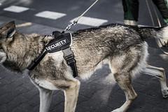 Security! (BisonAlex) Tags: kutnahora 庫納赫拉 捷克 europe 歐洲 sony a73 a7iii a7m3 a7 taiwan 台灣 外拍 旅拍 travel 街拍 street streetphoto streetshot
