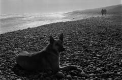 4 (mati.a) Tags: beach sea playa perro people dog analog chile film 35mm bw nikon fm2 nikonfm2 ilford hp5 ilfordhp5plus