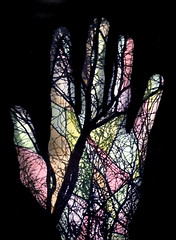 Hand tree colorized (Area Bridges) Tags: hand tree color colorized paper print 1985 highschool wellesley darkroom experiment experimental silhouette photogram 80s revisited