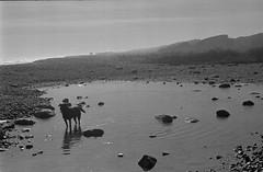 7 (mati.a) Tags: water beach chile analog dog perro bw 35mm film nikon fm2 nikonfm2 ilford hp5 ilfordhp5plus
