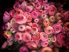 Impression (remiklitsch) Tags: stilllife fiftyshadesofpink bouquet impressionism impression poppies remiklitsch pink flowers santamonica market iphone