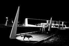 Koudelka's Law (TransientEye) Tags: leica m7 35mmf14summilux kodak 400tx ilford id11 ei1600 1600 pushprocessing pushprocessed night dark highcontrast urban dog sillhouette city street koudelka