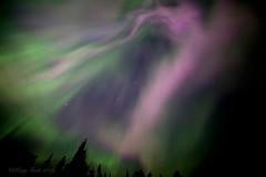 Pink Whirl (Katy on the Tundra) Tags: northernlights pinkaurora auroraborealis
