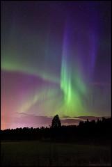 Norrsken (Jonas Thomén) Tags: norrsken aurora auroraborealis northerlights revontulet foxfire field åker forest woods skog träd tree stars stjärnor green grönt purple lila