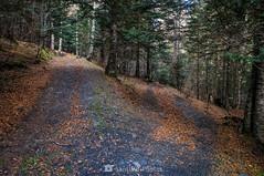 Disyuntiva (SantiMB.Photos) Tags: 2blog 2tumblr 2ig artigadelin esbòrdes valldaran valdaran pirineos pyrenees lleida otoño autumn camino way path bosque forest geo:lat=4268671560 geo:lon=070903520 geotagged bordeses cataluna españa