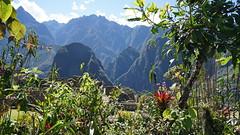 A perched high botanical garden (Chemose) Tags: sony ilce7m2 alpha7ii mai may pérou peru machupicchu montagne mountain andes botanique botanical jardin garden flower fleur orchidée orchid