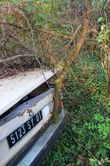 Un arbre dans le pare choc (Raphael Drake) Tags: epave voiture car wreck abandoned abandonne citroen ln lna rurex decay decayed barn
