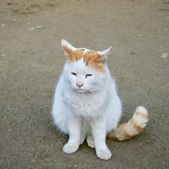 #cat #猫 #ネコ #ねこ #alleycat #野良猫 #日本 #Japan #東京 #Tokyo #Katze #chat #кошка #KAT #gato #Kucing #Кіт #แมว #Köttur #kissa #котка #Mèo #Kot #고양이 #貓 #kočka #kass #муур #pisica (ivva) Tags: instagram ifttt cat 猫 ネコ ねこ alleycat 野良猫 日本 japan 東京 tokyo katze chat кошка kat gato kucing кіт แมว köttur kissa котка mèo kot 고양이 貓 kočka kass муур pisica