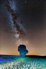 Voie lactée et l'arbre seul dans un champs (Regard céleste et terrestre) Tags: milkyway astrophography astronomie astronomy tokina canon60d canon nightscape nightscapes nebulosity nocturne