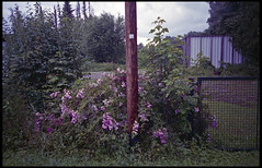 Sommerregentag im Moos (hagee) Tags: pskbn133hr017 olympusmju1 fujisuperia400 expired abgelaufen rainysunday germansummer