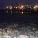 Living shores of Labrador