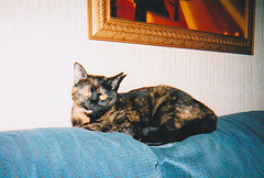 Dolly (Michael Vance1) Tags: pet cat oklahoma tortie
