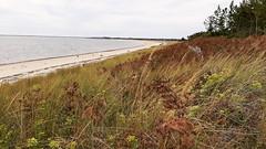 plage de Kerler   mer blanche, Mousterlin (Jeanne Menjoulet) Tags: plagedekerler merblanche mousterlin beach france brittany fouesnant finistère