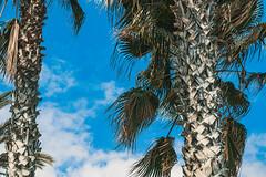 2019.Vakantie.Andalusie-2561.jpg (vocverl) Tags: spanje andalusie