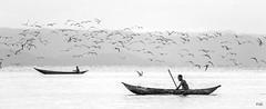 Douce fin de journée pour les piroguiers ... (Fabrice L.) Tags: 2019 mada2019 nb pirogues saintemarie madagascar canoé coucher soleil zen paisible cool tranquille peaceful tranquility boats birds tern sternes