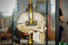 UG8_2248 (Ira Lee) Tags: guinness dublin ireland baileáthacliath duibhlinn liffey templebar bier musik townstreet bono u2 2019 edsheeran streetlife skull museum schädel totenkopf