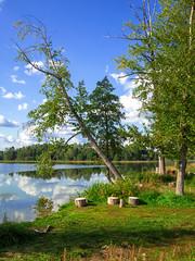 На природе // Outdoors (Alexx053) Tags: mzuiko17mmf18 em10iii olympus cloud sky tree shore lake landscape outdoor