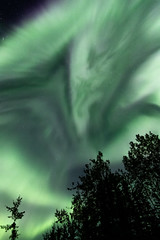 Welcome back, northern lights (frostnip907) Tags: auroraborealis northernlights alaska aurora auroras night nightsky astrophotography corona green