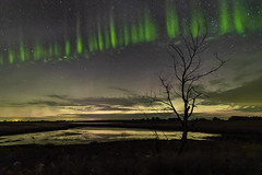 Picket Fence (cammckillican) Tags: wheatlandcounty alberta canada aurora northernlights auroraborealis nightscape nightphotography