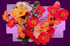 Flowerpower (SØS'Art) Tags: colors digiart digitalartwork art kunstnerisk manipulation solveigøsterøschrøder artistic drawing flower flowerpower paintings photomanipulation 100views 300views 500views 1000views inexplore 100faves 5000views 10000views 15000views photoshop filterforge nature