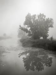 Morgennebel an der Wörnitz - Plate 2 (StefanB) Tags: tree fog germany deutschland mood treescape ries schwaben 2019 em5 1235mm mist nebel wörnitz