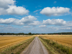 Harvest time (Joakim Billebo) Tags: grass gravel landscape sweden närke fujifilm harvest bluesky trees summer blue xf23 clouds road xt2 photography fields sky sun xf23mm harvesttime yellowfields hallsberg