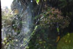la Toile,: absence ou présence ? éloignement ou proximité ? (fidber) Tags: toile araignée