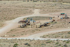 Working in the desert (SusieMSB7) Tags: horses desert outdoors landscape