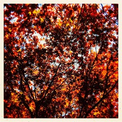 Fabulous Foliage (Explored) (Julie (thanks for 9 million views)) Tags: image78100 100xthe2019edition 100x2019 sliderssunday hipstamaticapp foliage leaves spring colour jfkarboretum wexford ireland irish iphonese squareformat inexplore