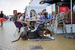 Beautiful dogs (ost_jean) Tags: nieuwpoort streetphotography nikon d5300 tamron sp af 1750mm f28 xr di ii vc ld aspherical if b005n saintbernard dogs honden ostjean