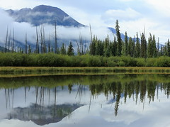 After the Rain (Golden Ginkgo) Tags: canadianrockies banffnationalpark mountains fog reflections