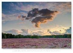 The cloud (Luuk Belgers) Tags: cloud heather heath sunset purple summer meinweg