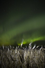 Bearded Borealis (DustinGinetz.Photography) Tags: auroraborealis northernlights solar wind storm dark sky night farm aurora green