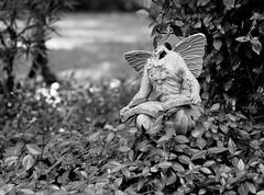 Headless Angel (SnapRat200) Tags: olympus epl7 monochrome rokkor rokkor55mm17 mf blackandwhite vintagelens manualfocus