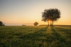 Above the fog (Sebo23) Tags: landschaft landscape nature naturaufnahme natur nebel fog morgenstimmung morninglight morgenlicht sonnenstrahlen sonnenaufgang sonne sunrise sunbeams sunstar canon16354l canoneosr
