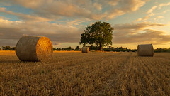 Sunshine & Straw. (Ian Emerson (Thanks for all the comments and faves) Tags: harvest bales tree summer stmaryschurchplumtree nottinghamshire tollerton farmland fields clouds light canon6d