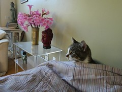 2nd Morning, New Place (Room With A View) Tags: wiki cat bed buddhas flowers