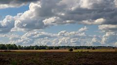 Hei Holland (ZaaziPix) Tags: hei heide moorland holland prehistory paleo prehistoric primal