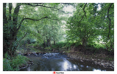 Berwinne (creek) at Dalhem (Belgium) (Ruud Maas) Tags: belgium berwinne dalhem nature creek flowingwater greenleaves hiking landscape smallwaterfall stones stream summer sunnymorning trails tree trees water woodland