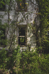 Abandoned Home (Notley Hawkins) Tags: httpwwwnotleyhawkinscom notleyhawkinsphotography notley notleyhawkins 10thavenue 2019 afternoon newtopographic topographic architecture home house abandoned riverbottoms bottomland missouririverbottoms chamoismissouri shadows rural outdoors osagecounty osagecountymissouri foliage greenery summer august
